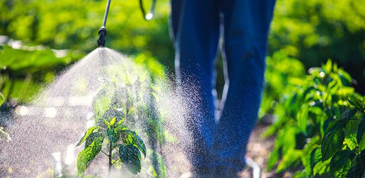 salute delle api e ruolo dei pesticidi nell'agricoltura